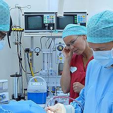 operation, veterinär
