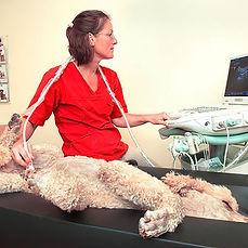 ultraljud, hund