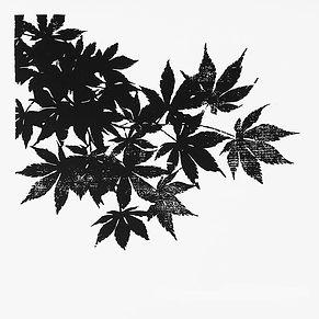 Japanese Maple (248).jpg