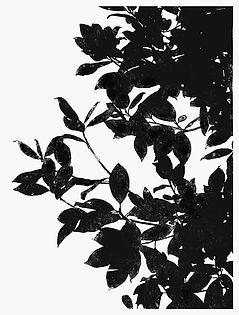 Magnolia 2 woodcut