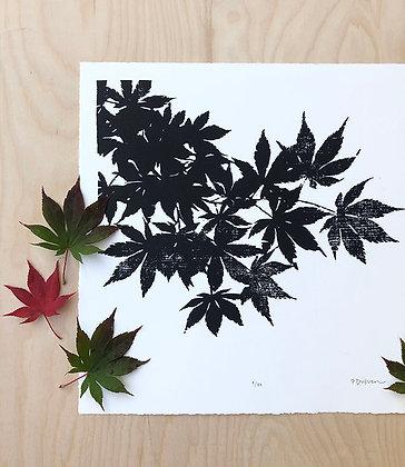 Japanese Maple Print