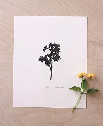 Curly Parsley Print