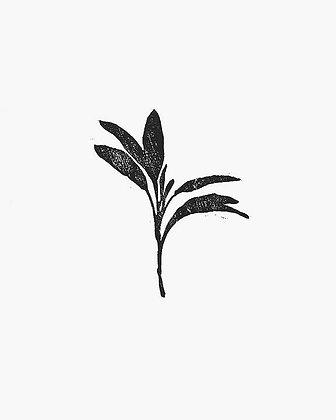 Sage Print