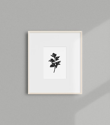Italian Parsley Print