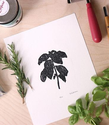 Basil Print