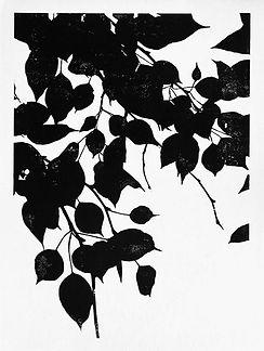 OsageOrange(248).jpg