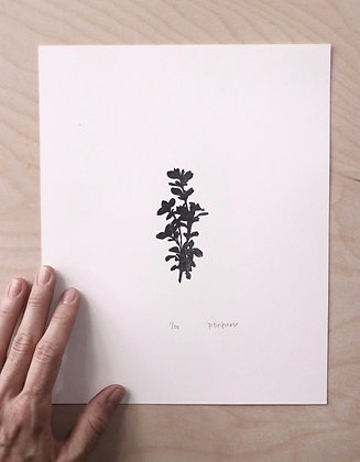 Lemon Thyme Print