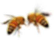beez for home.png