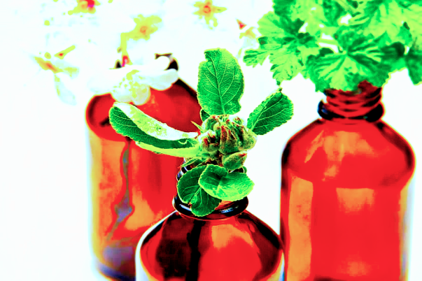 Brown glass bottles with fresh mint leaves and flowers