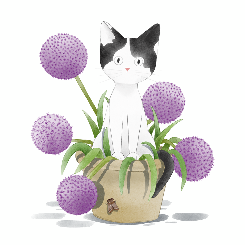 Mitzy in Alliums