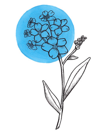Day 7 Forget-Me-Not .jpg