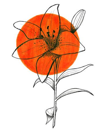 Day 2 Tiger Lily.jpg