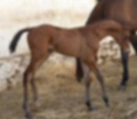 Dadgar-2 weeks old.jpg