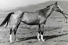Kepderi, 1953 (Terkuš-Temri).jpg