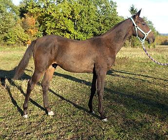 Djangir-6 months.jpg