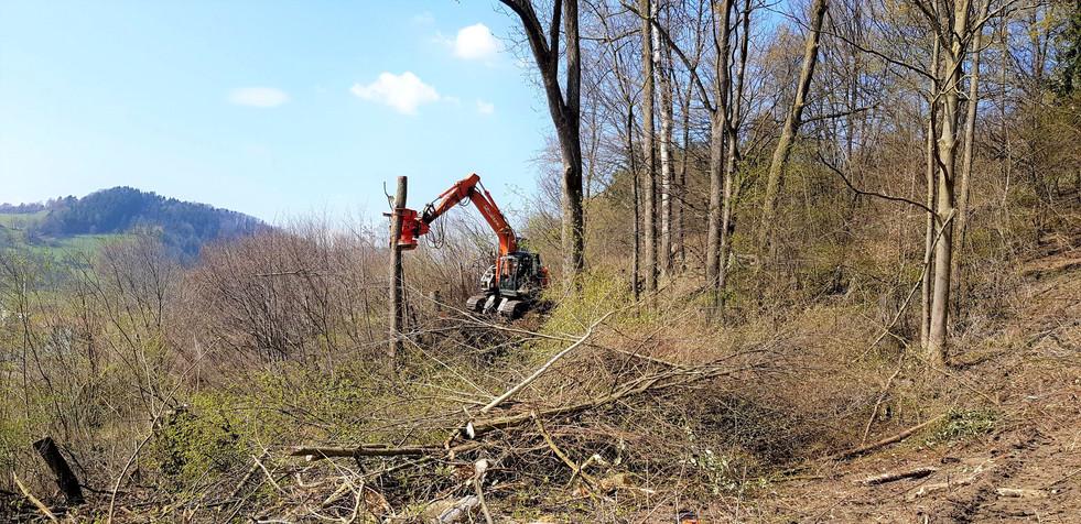 Abschnittsweises Abtragen eines Baumes