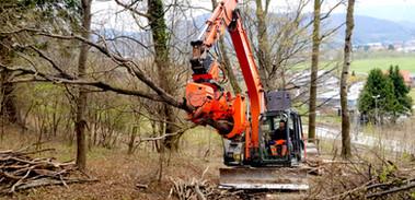 Baumfällung mit unserer Baumschere (Woodcracker)
