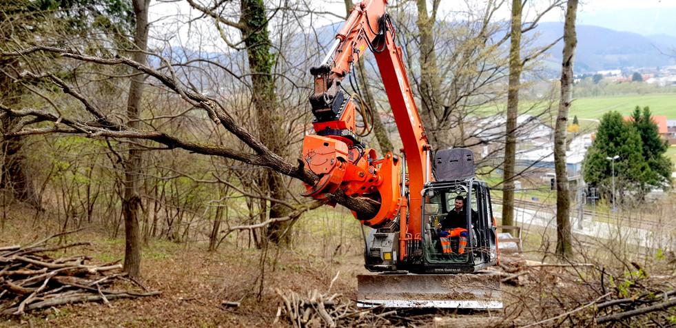Baumernte mithilfe unserer Baumschere