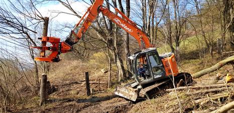 Sichere Baumernte mithilfe unserer Baumschere (Woodcracker)