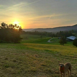 Blue Ridge Vineyard view 2