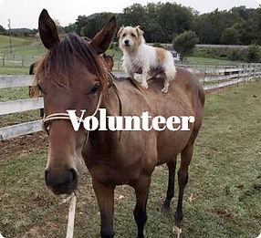 help-volunteer.jpg