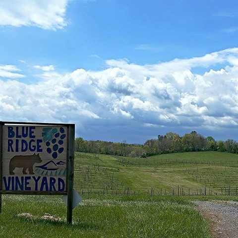 Blue Ridge Vineyard entrance