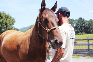 Cecelia adopted wild mustang with Army v