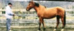 donate-horse-300x129.jpg