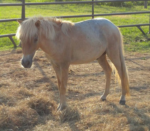 Lincoln rescued from kill pen.JPG