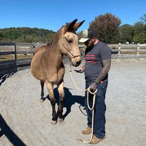 Army veteran with Maury mule adopted.jpg