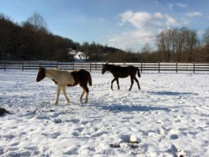 about-horses-in-winter-300x225.jpg