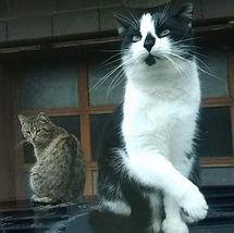 team-mama-cat-tux.jpg
