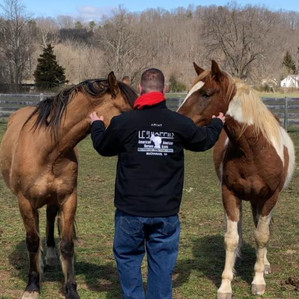 Ghost and Watson adopted mustangs with N