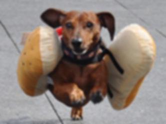RACING WIENER DOG_edited.jpg