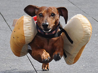 RACING WIENER DOG_edited.jpg