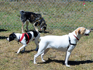 Fairfield Opens Dog Park