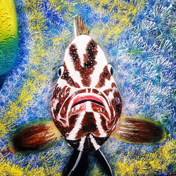 grouper painting