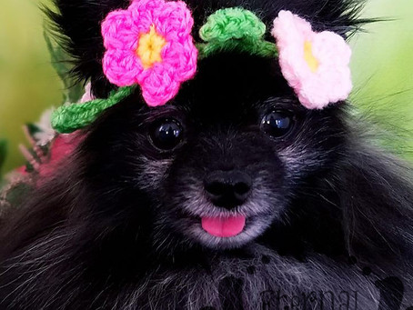 Pet Spring Flower Crown (XS-XL) Any Colors and Sizes