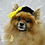 Thumbnail: Pet Graduation Hat (XS-XL)