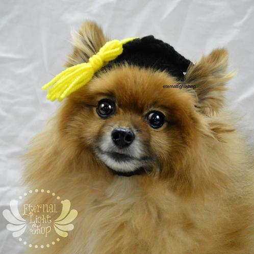 Pet Graduation Hat (XS-XL)