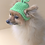 Thumbnail: Pet St. Patrick's Day Beanie (XS-XL)