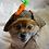 Thumbnail: Pet Carrot Bunny Beanie (XS-XL)