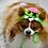 Thumbnail: Pet Zombie Halloween Hat Beanie (XS-XL) Any Colors