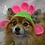 Thumbnail: Pet Flower Beanie (XS-XL) Any Colors