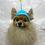 Thumbnail: Pet Sunny Beanie (XS-XL)