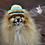 Thumbnail: Pet Sombrero Hat (XS-XL)