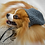 Thumbnail: Pet Slouchy Hat Beanie (XS-XL) Any Colors