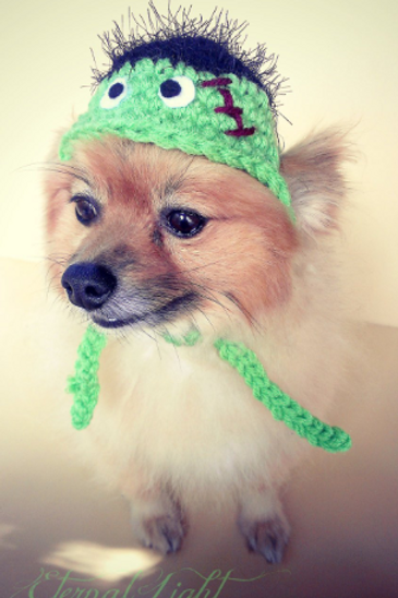Pet Frankenstein Beanie (XS-XL)