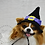 Thumbnail: Pet Witches Hat V1 Beanie (XS-XL) Any Colors