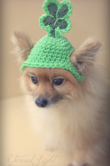 Pet St. Patrick's Day Beanie (XS-XL)